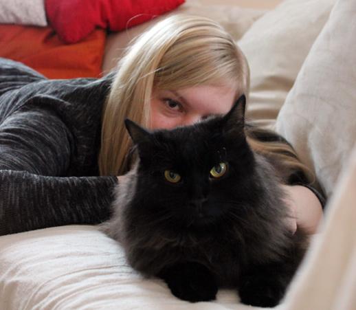 Blogkatzen- Zorro und Diana