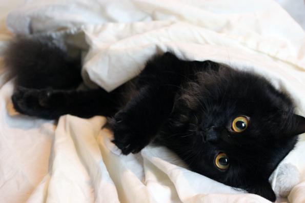 Blogkatzen-Zorro