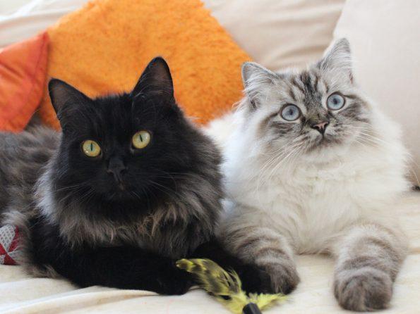 Blogkatzen Zorro und Simba gemeinsam