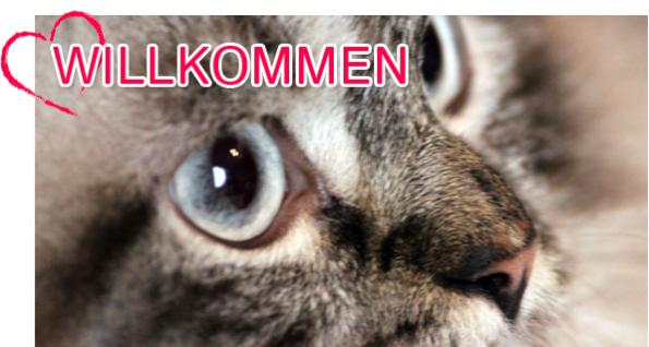 Blogkatzen Willkommen
