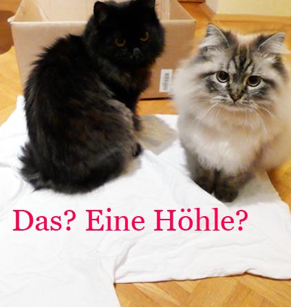 Blogkatzen-Katzenhöhle