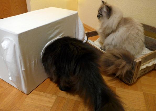 Katzenhöhle mit Zorro und Simba