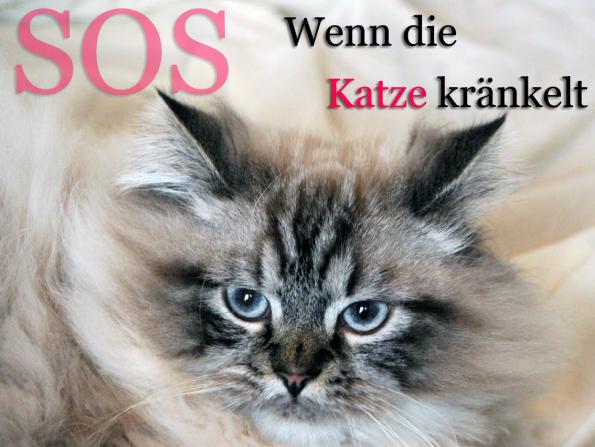 Blogkatzen-Kranke Katze