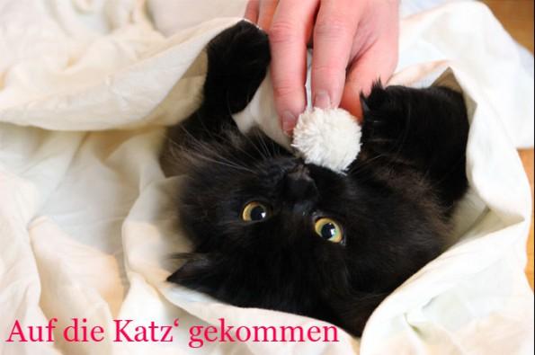 Auf die Katz' gekommen - Blogkatze Zorro mit seinem Bällchen