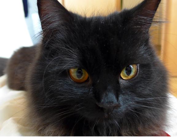 Blogkatzen-Zorro in der Pubertät