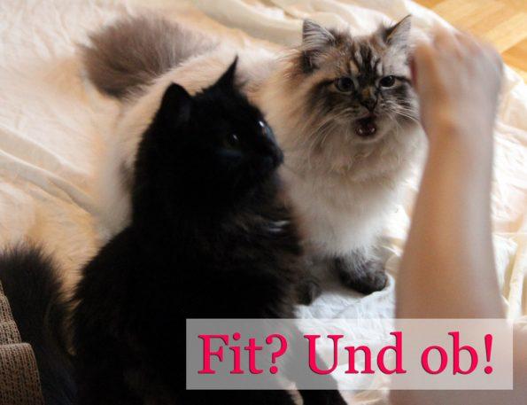 Katzen bei der Futtergabe