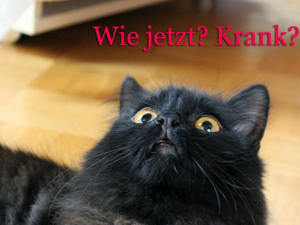 Blogkatzen-Kranke-Katze