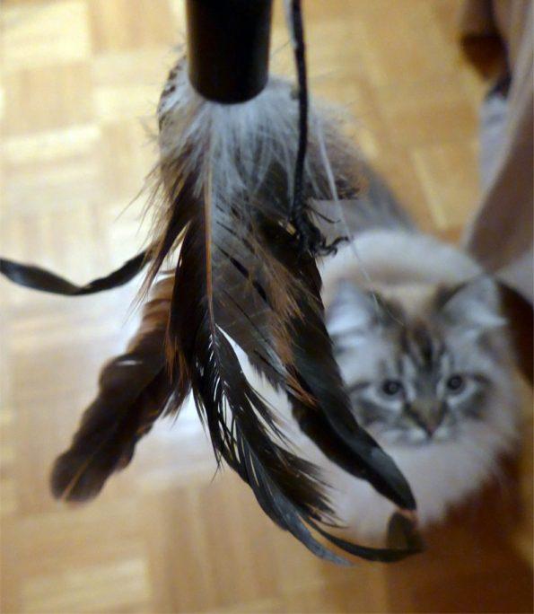 Blogkatzen-Spielangel