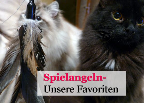 Spielangeln für Katzen