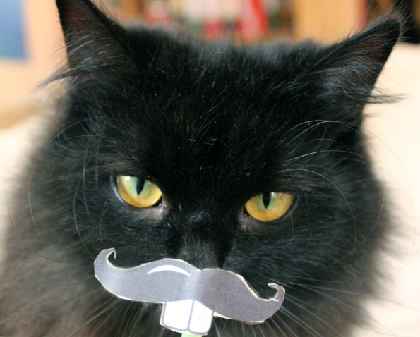 Osterhase Zorro