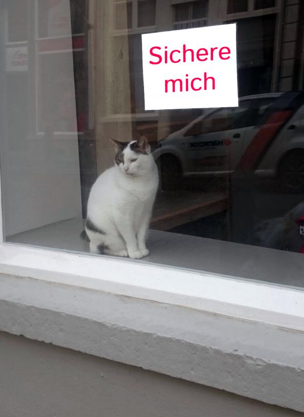 Fensterschutz und Balkonschutz für Katzen