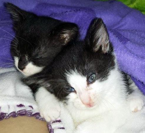 Gismo und Schwester