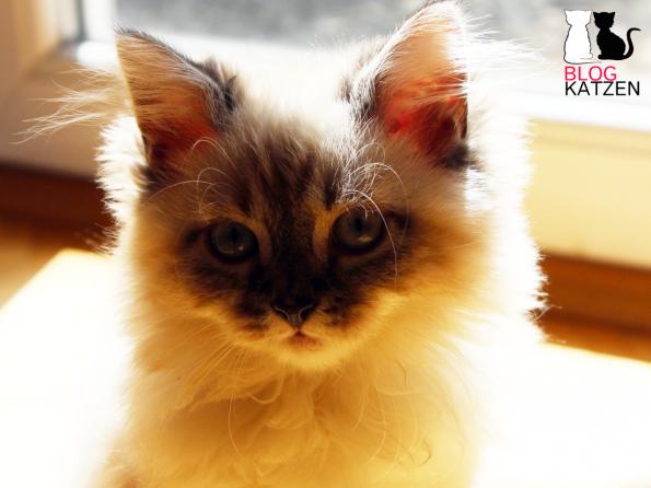 Blogkater als Katzenkinder