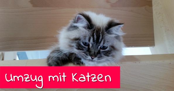 Umzug mit Katzen
