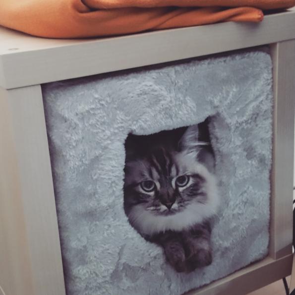 IKEA Regal Katzenhöhle
