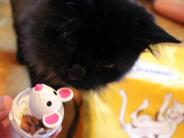 Snacky Mouse mit Zorro