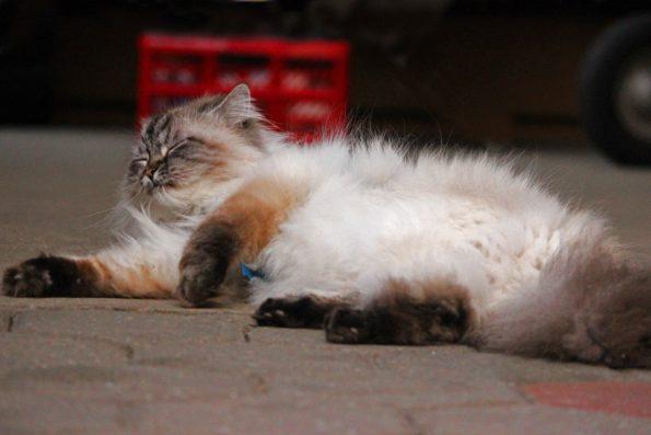 Müde Katze im Hof
