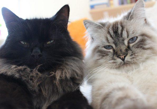 Katzencharaktere