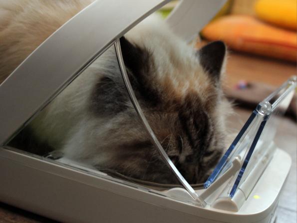 SureFeed Futterautomat fressende Katze