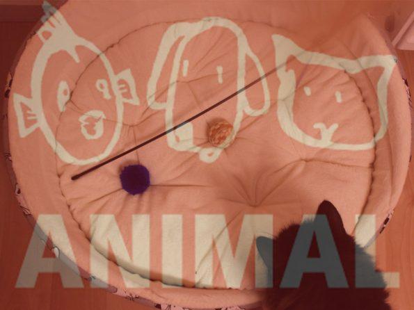 Animal Heimtiermesse