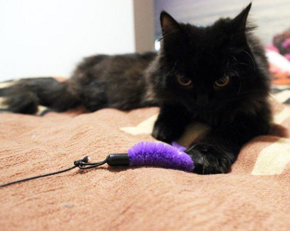 Zorro mit ErgoCat Katzenangel Erweiterung
