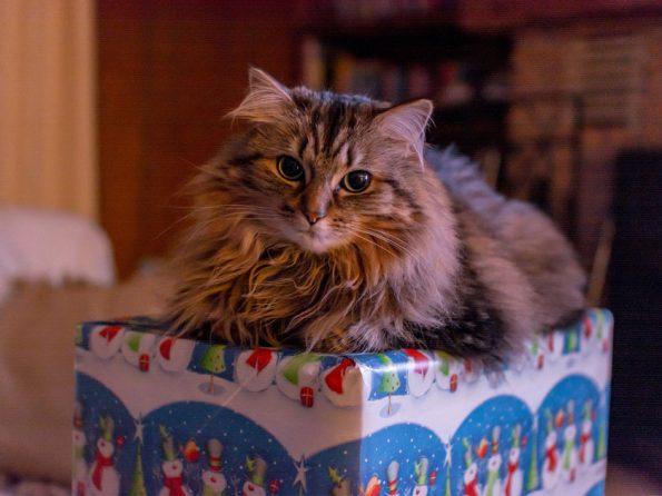 Geschenke Katze