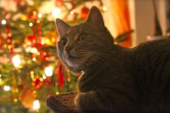 Katze mit Weihnachtsbeleuchtung