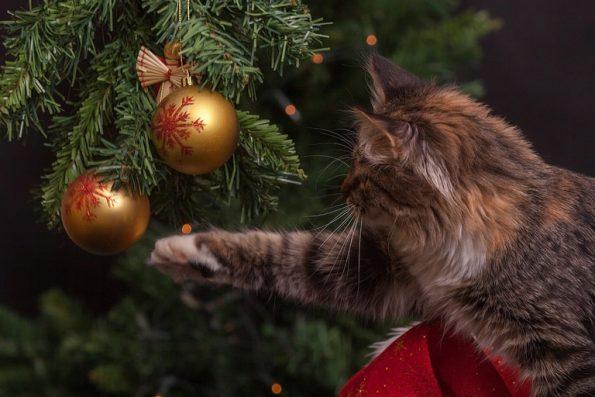 Katze und Weihnachtsdeko und Tannenbaum