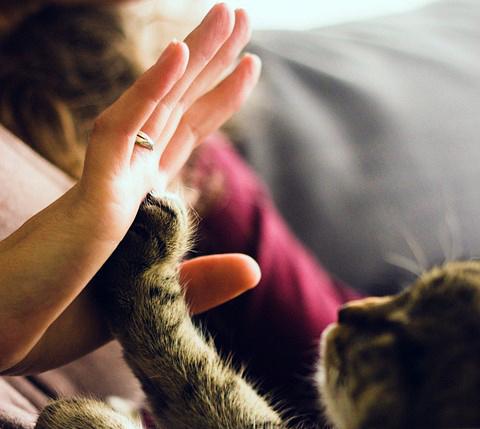 Kooperation Katze Mensch