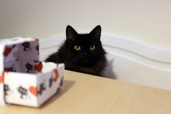 Papierbox selbst falten-Blogkatzen