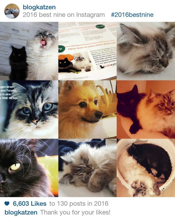 Insta Best Nine Blogkatzen