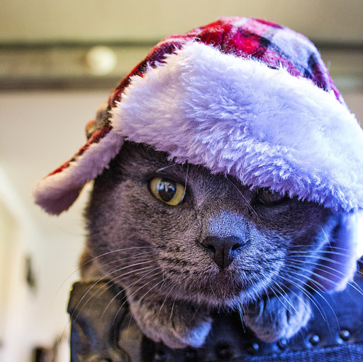 Katze mit Weihnachtsmütze