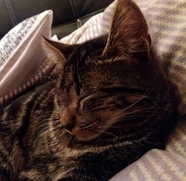 Katze Krümel- Happy Felis