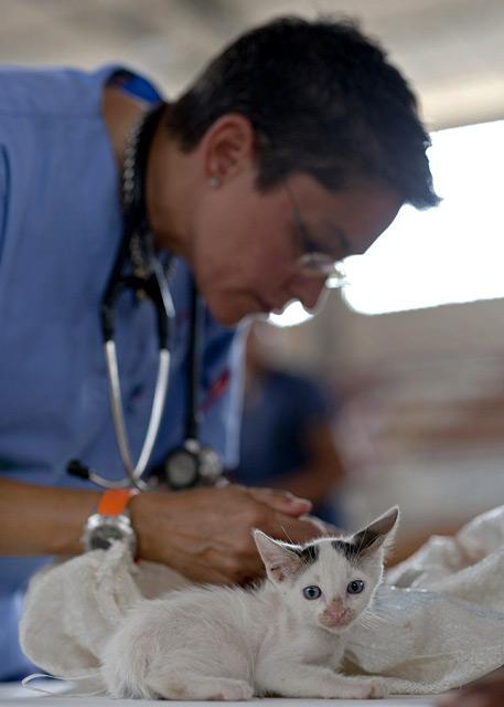 Straßenkitten Tierarzt