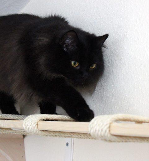 DIY Wandbrett für Katzen