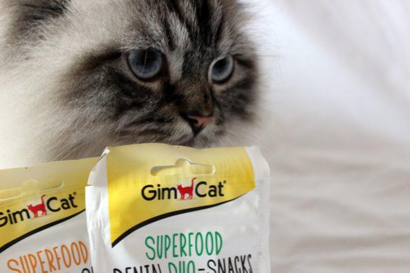 GimCat Produkttest