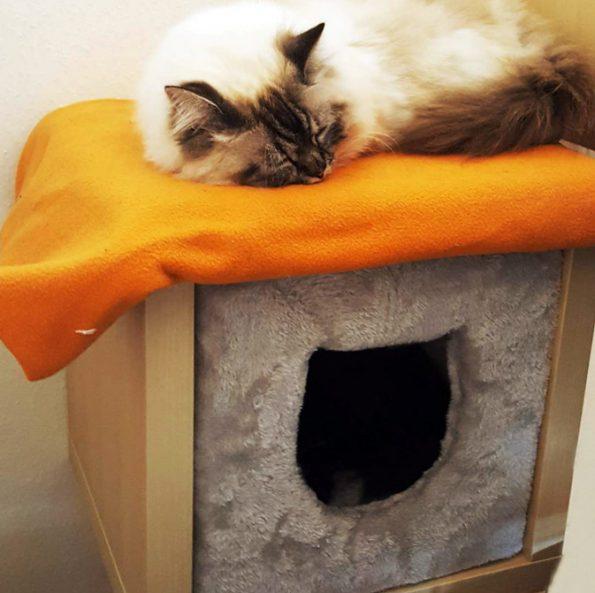 IKEA-Katzenhöhle-Regaleinsatz-Kallax