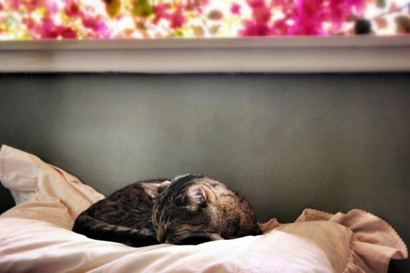Katzen Lieblingsplatz- Katze Rupert