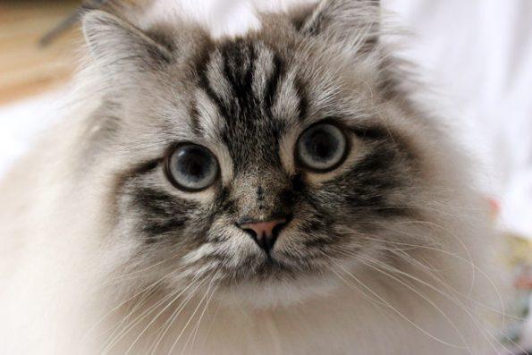 Verzweifelt- was ist mit meiner Katze?