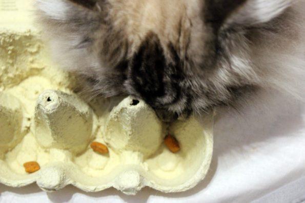 Eierkarton als Katzenspielzeug umfunktionieren