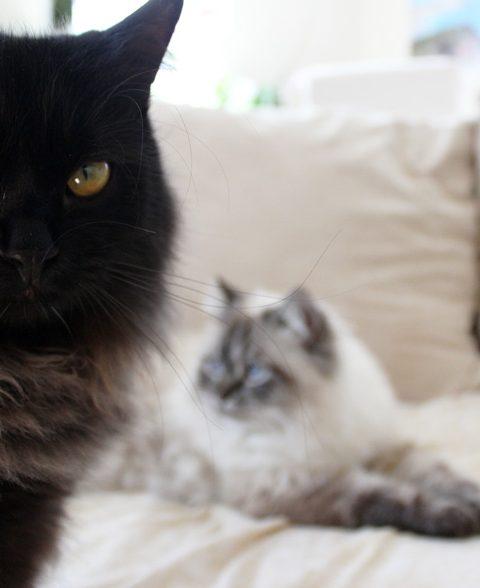 Kann man eine Katze alleine halten?