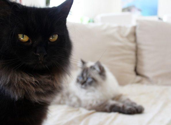 Einzelhaltung Katzen?
