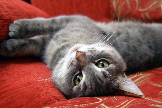 Darf die Katze im Bett schlafen?