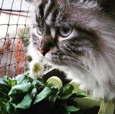 Frühling-Katze mit Blume