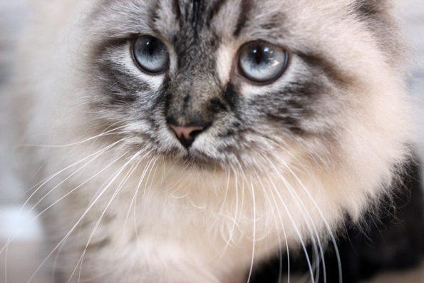 Katze_einzeln
