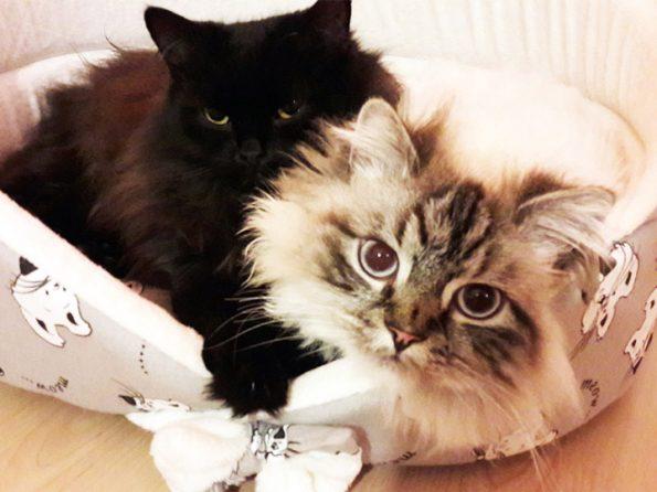 Katzen schmusen