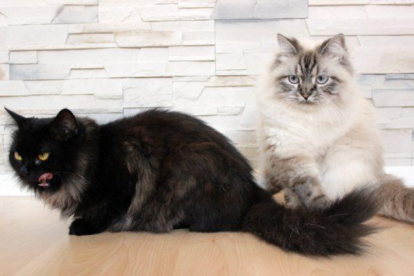 Katzen zu zweit