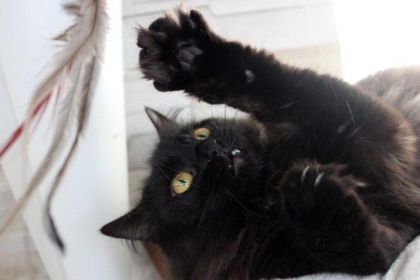 Spiel mit der Katze