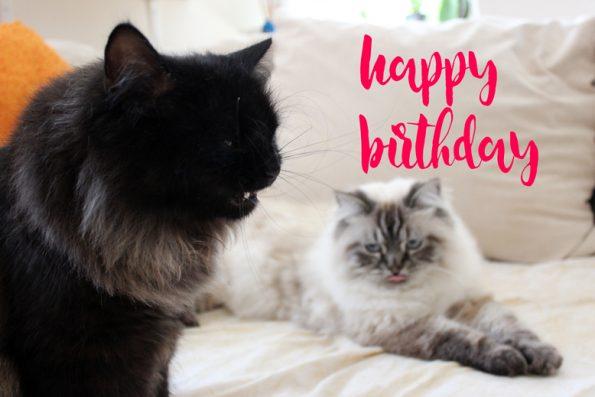 Geburtstag Blogkatzen