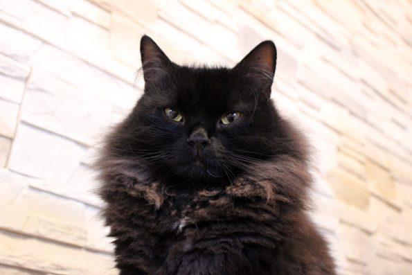 Katze- keine Lust zu spielen
